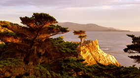 Lone Cypress Monterey. Sunset Lone Cypress Monterey California Pebble Beach Stock Photography