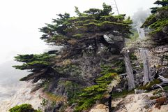 Lone Cypress Pebble Beach stock photo