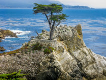 The Lone Cypress, Pebble Beach, CA Royalty Free Stock Photography