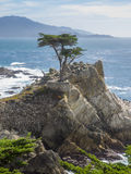 Lone Cypress Stock Images