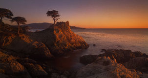 The Lone Cypress stock images