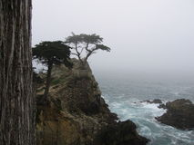 The Lone Cypress Tree. Perched over the Pacific Ocean for hundreds of years, Monterey Cypress, cupressus macrocarpa, California, CA Stock Photography