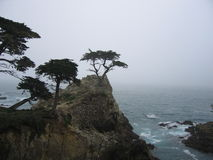 The Lone Cypress Tree. Perched over the Pacific Ocean for hundreds of years, Monterey Cypress Stock Photo