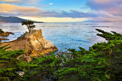 Lone Cypress Tree. Famous Lone Cypress Tree, 17 mile drive California royalty free stock photography