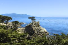 Lone cypress tree Stock Photos