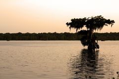 lone cypress tree on lake martin during a cool sunset after a rain shower royalty free stock photography