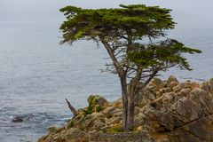 Lone Cypress Tree. The lone cypress tree on a rocky outcrop along 17*mile drive in Monterey, California stock image