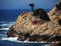 Lone Cypress tree near the ocean. A lone cypress tree near the ocean on a rocky shore. Located in Point Lobos state park near Carmel California Stock Images