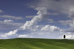 1 lone cyprus trees in the fields around San Quirico in the Val D'Orcia in Tuscany Royalty Free Stock Images