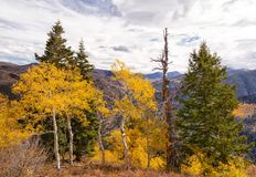 The Lone Dead Pine. Autumn landscape in the Wasatch mountains of Utah Stock Photos