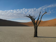 Lone dead tree, Africa. A 600 year old dead Acacia tree stands alone in a sun baked clay pan, Sossuvlei Namibia Stock Photos