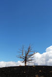 A lone dead tree against a blue sky. A detail of a lone dead tree, from the etna volcano, near catania, in sicily, useful as a background, some space for text on Royalty Free Stock Photo