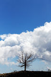 A lone dead tree against a cloudy sky. A detail of a lone dead tree, from the etna volcano, near catania, in sicily, useful as a background, some space for text Stock Photos