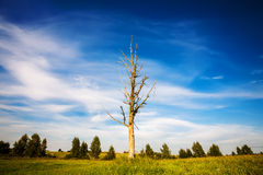 Lone dead tree Stock Photos