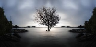 A lone dead tree and partially submerged in the sea on sunset., Stock Images