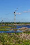 A Lone Dead Tree Stands in the Waters Created as a Man-Made Wetland Royalty Free Stock Image