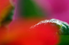 Lone dew drop Royalty Free Stock Image