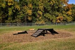 Lone dog  run in a newly created dog park