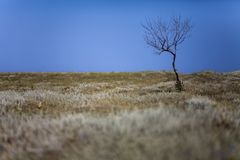 A lone dry tree without leaves stands by the road Royalty Free Stock Photo