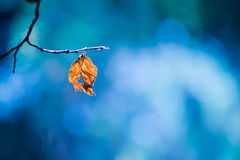 Lone dry yellow leaf on a branch Stock Image