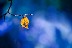 Lone dry yellow leaf on a branch Royalty Free Stock Photography