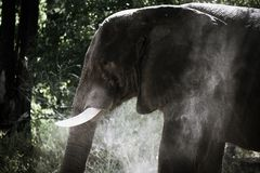 Lone Elephant in the bush in Africa Royalty Free Stock Images
