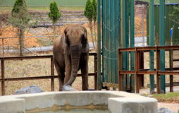 Lone Elephant standing in enclosure near watering trough Stock Photo
