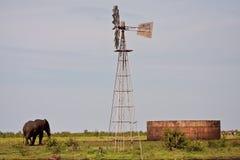 Lone elephant walking to dam Stock Photo