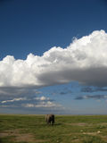 Lone Elephant. A lone elephant wanders off into the distance in  Kenya Stock Photo