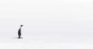 Lone Emperor penguin Stock Photos
