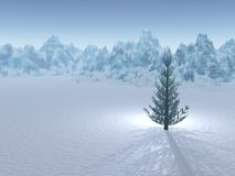 Lone Evergreen Tree in Winter. A single evergreen tree on a plain of snow. Mountains are diffused in the background. An imaginary spotlight shines behind the Stock Photography