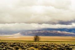 Lone Farm Tree. A stitched panorama Stock Image