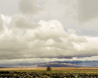 Lone Farm Tree 2. A stitched panorama Stock Photo