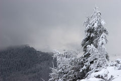 Lone Fir Tree With Snow Clouds In Background Royalty Free Stock Photography