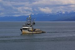 Fishing boat returns to the Harbor. Lone fishing boat returns to Homer with a full catch for the day Stock Photo