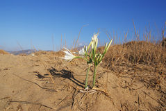 Lone flower in the desert Stock Photos
