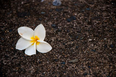 Lone flower Stock Image