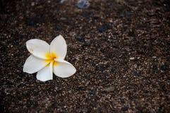 Lone flower Stock Image
