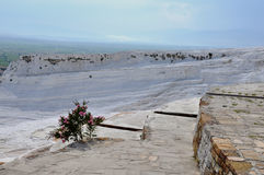 Lone Flowering Shrub on Travertines at Pamukkale, meaning cotton castle in Turkish. Stock Photo