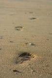 Lone footprint at beach Stock Image
