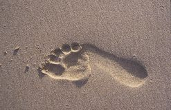 Lone footprint in the sand. Close up of a lone footprint in the sand possibly symbolizing freedom, the human spirit or man`s relationship with the land.   Of Royalty Free Stock Photography