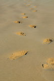 Lone footprints. In the sand Royalty Free Stock Photos