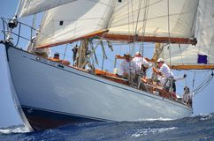 Free Lone Fox Sailing Royalty Free Stock Images - 61159269