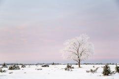 Lone frosty tree in a winter landscape Royalty Free Stock Image