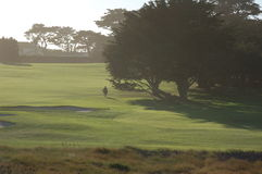 The Lone Golfer. Anonymous Golfer enjoying a late afternoon round on the Monterrey Peninsula Royalty Free Stock Photo