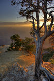 Lone Grand Canyon Pine Tree Stock Photos