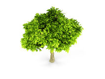Lone green tree isolated on white Royalty Free Stock Image