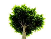 Lone green tree isolated on white Stock Photo