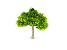 Lone green tree isolated on white Royalty Free Stock Photos