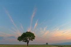 Lone green tree with streaky clouds Royalty Free Stock Photos